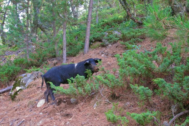 Fotturer svarte skog singler