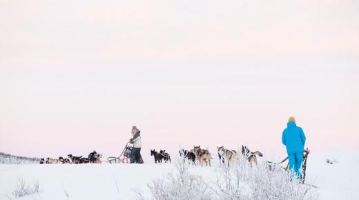 Hundekjøring i Kjervelvdalen
