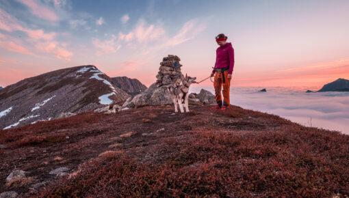 Veidmannsfjellet 503 moh